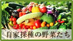 自家採種の野菜たち