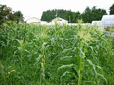 どうして、肥料無しで作物が育つの?