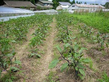 有機農業との違いは?